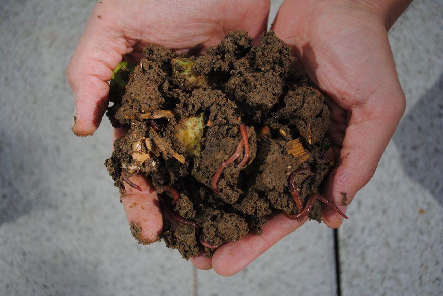 Read more about the article Le compostage et vous : le test de la poignée 🐛